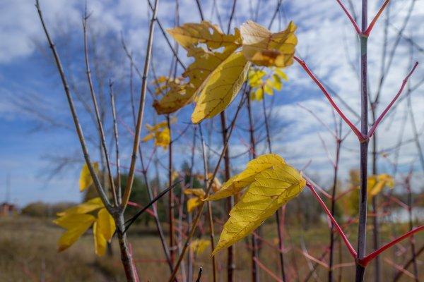 L'automne de Siberie