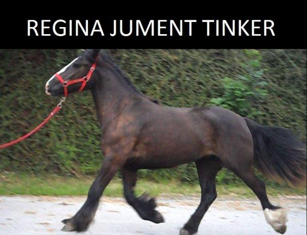 Magnifique jument Tinker
