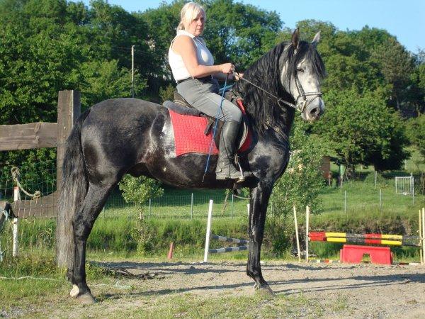 cheval espagnol pie a vendre