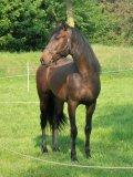 Photo de chevauxavendredinant