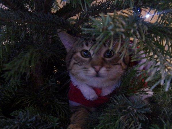 petit chatpin  Noël