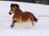 HorseeDream
