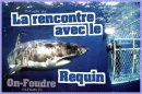 Photo de rencontre-avec-le-requin