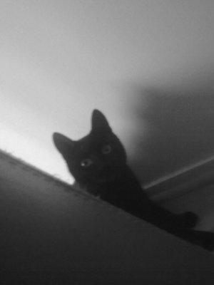 X -- Little-Stupid-Cat -- X