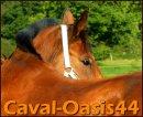Photo de caval-oasis44