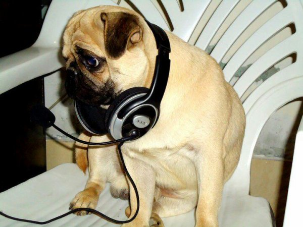 My dog love music