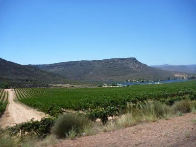 Le pif sud africain