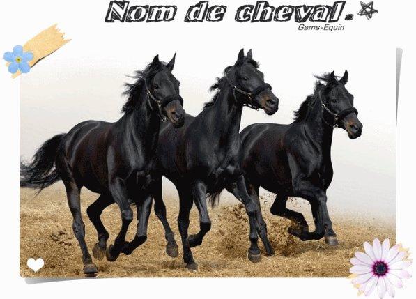 Nom de cheval . ♥