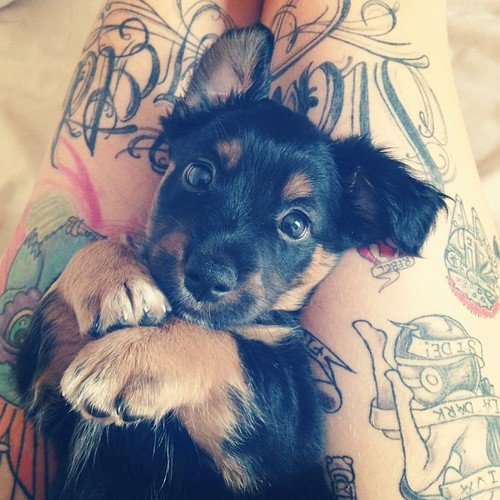 """""""Lorsque nous avons un animal de compagnie la vie nous semble moins triste."""" _ Amy Softpaws"""