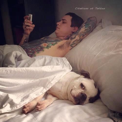 « Le chien est l'animal le plus vigilant ; pourtant, il dort toute la journée. » [ Georg Christoph Lichtenberg ]