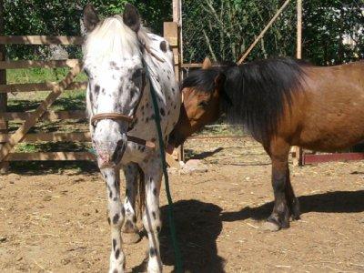 loustic et apache