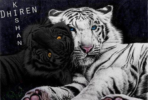 La saga du tigre .... Un peu de nouveauté