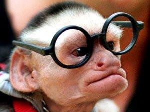 macaque drole mai ki fai peur blog de blog de debile. Black Bedroom Furniture Sets. Home Design Ideas