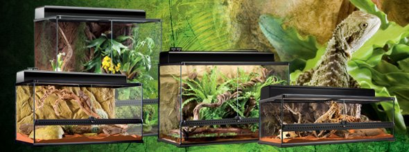 pr paration terrarium python royal blog de o0om3ll3 python royalo0o. Black Bedroom Furniture Sets. Home Design Ideas