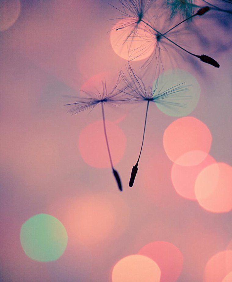 Je te cherche toujours mon amour ou es tu ?!?! ???
