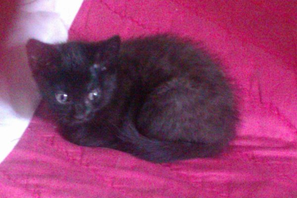 Mon chaton Black M(inou)