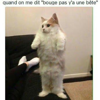 Lol la posture du chat !