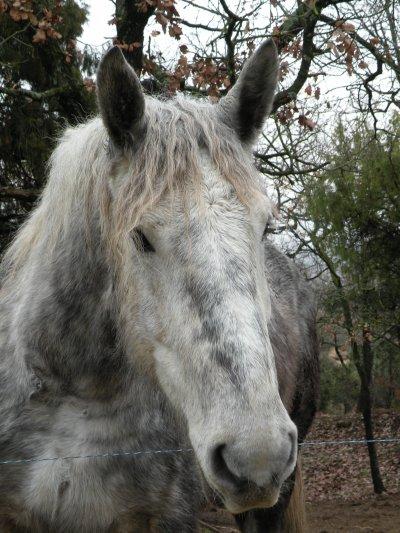 Le cheval de mes rêves?