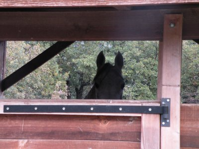 les chevaux du refuge