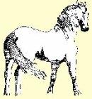 Photo de le-happy-horse-ranch