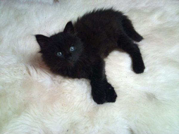 Mon Chaacha ♥ ; Faust le chat le plus con et adorable de la planète ♥