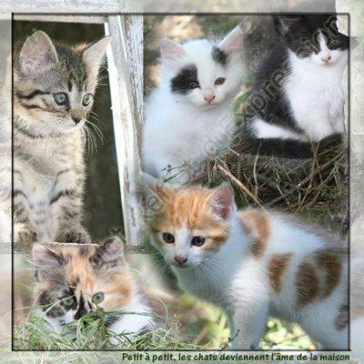 plein de chat