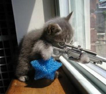 ou lala méchant le chaton !!