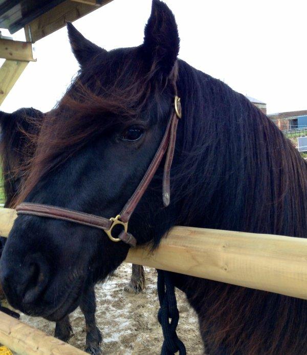 Beau poney !
