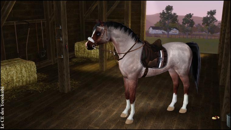 Présentation de la propriétaire et des chevaux du Centre