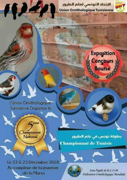 Mes résultats pour le national ornithologique Tunisien
