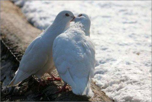 L Hob L Amour Chaemae Love