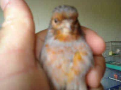 male 2010