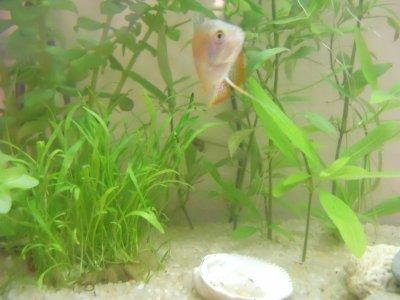 premiere parti de mon aquarium