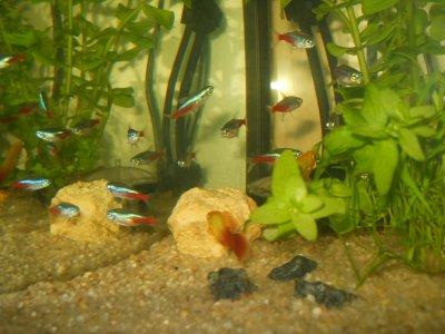 deuxieme parti de mon aquarium