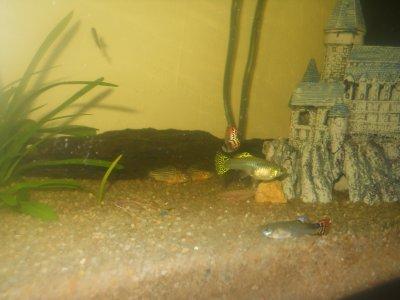 quatrième parti de mon aquarium