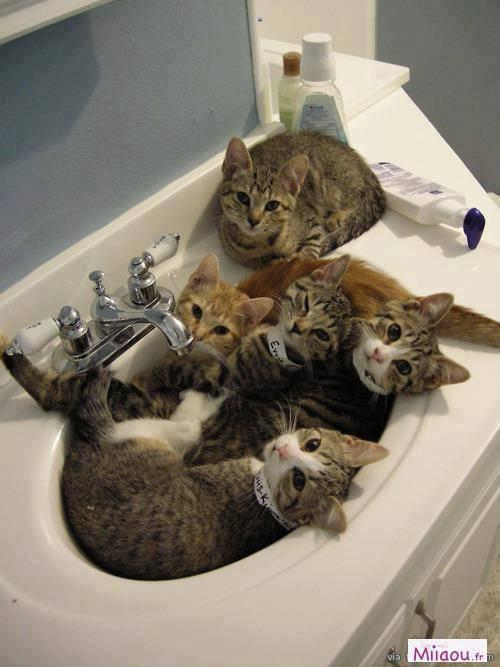 aller au bain les gamains
