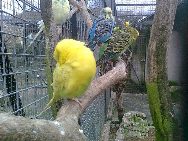 16 novembre 2012 ( animaux )