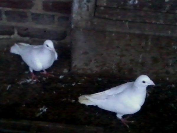 nouveau couple de blanc