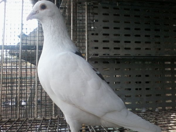 male 2005