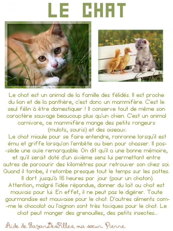 Le Chat ... ♥ ;)