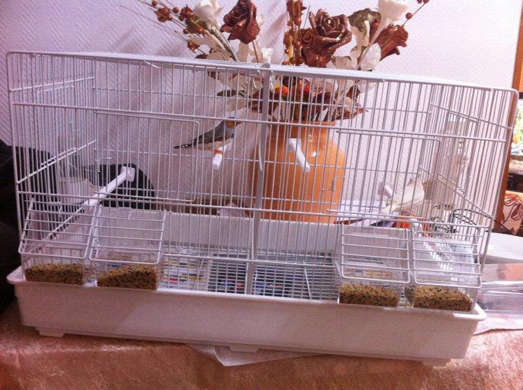 L'achat de ma nouvelle cage