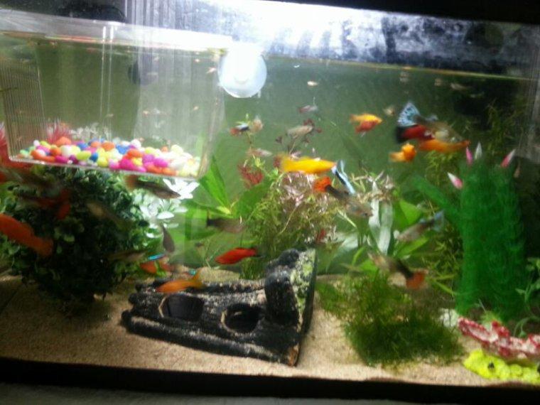 Changement du sable et quelque décor de mon aquarium