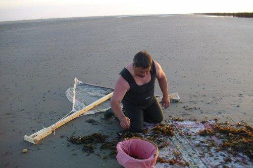 peche aux crevettes