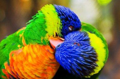 image amour oiseau