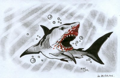 White shark k tacombe tattoo c - Dessin de requin blanc ...