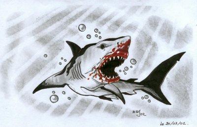 White shark k tacombe tattoo c - Dessin de grand requin blanc ...