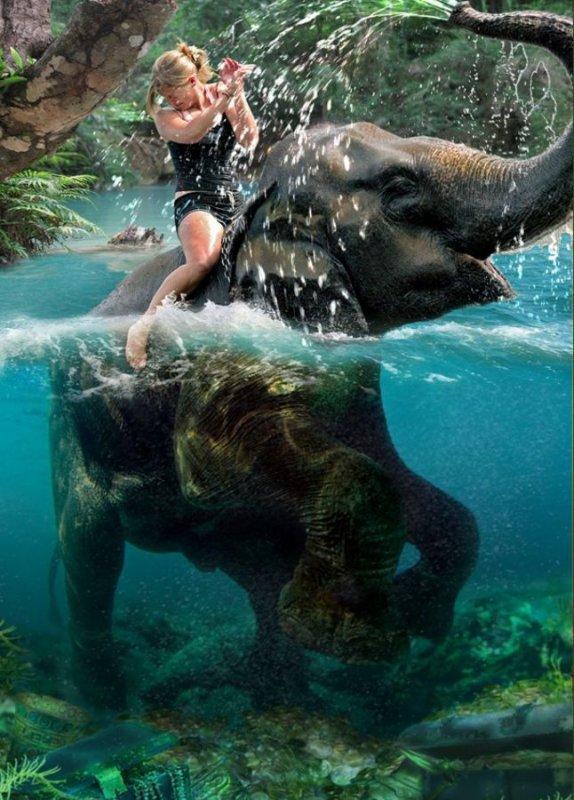 """               L'éléphant                    """