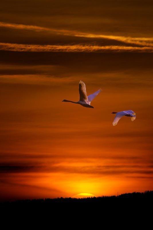 °     Jolis  coucher  de  soleil       °