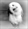 Sous-un-costume-de-plume