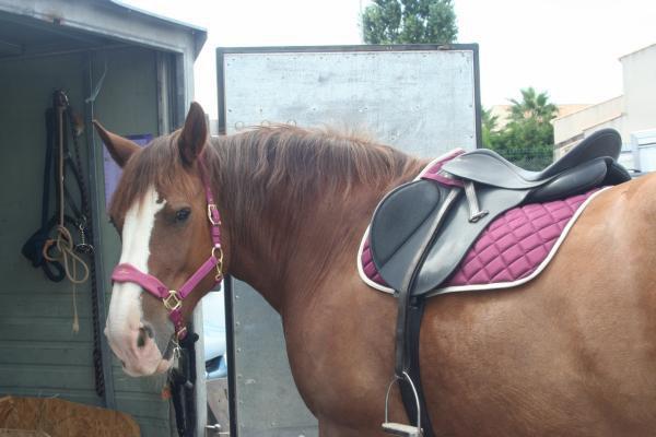 Tout le matériel d'équitation dont je me sépare est là =)